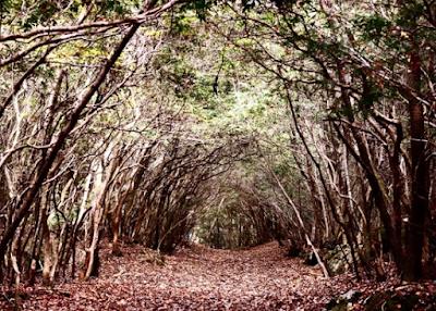 Aokigahara Woods