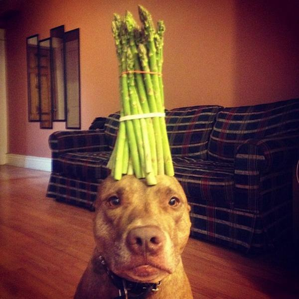 Chùm ảnh chú chó dễ thương làm xiếc giữ đồ vật trên đầu cực siêu