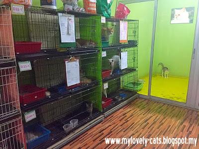 cat room 4c