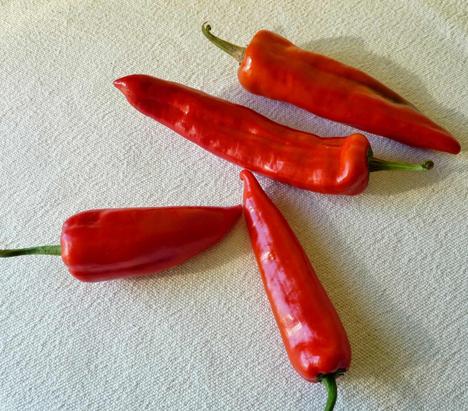 Red Shepherd Peppers & Chervena Chushka Peppers