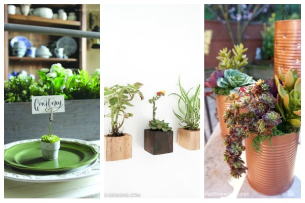 real and faux succulents