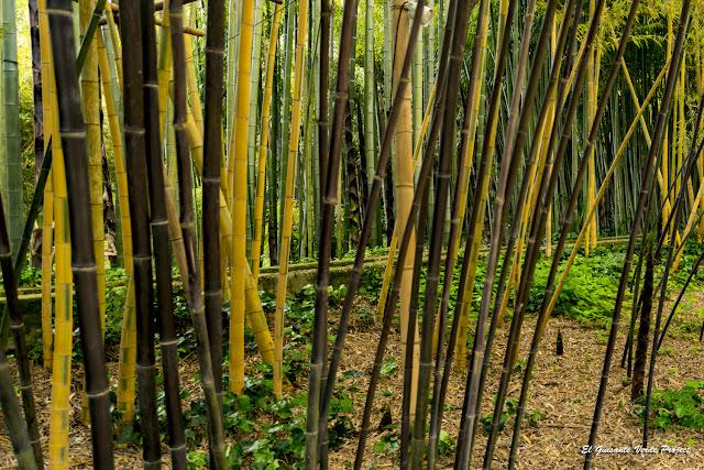 Bambús negros y amarillos de la Bambouseraie de Cévennes, Francia por El Guisante Verde Project