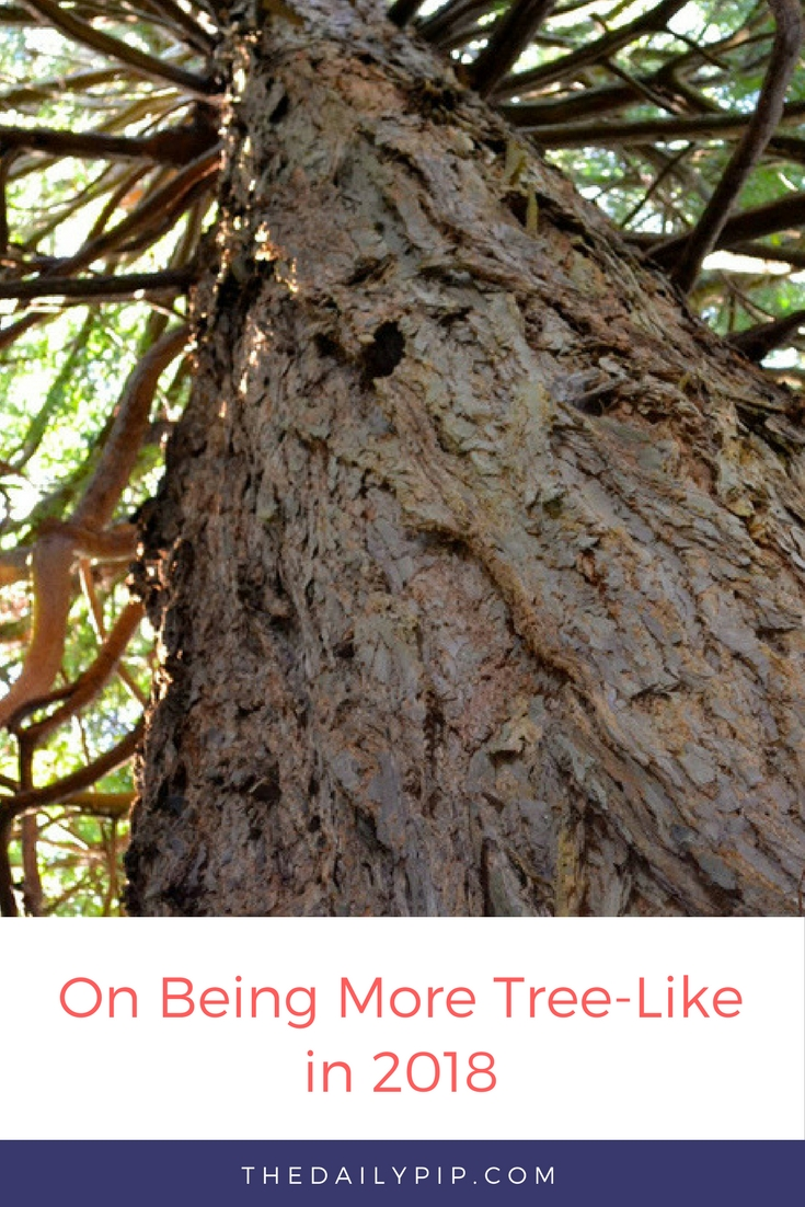 On being more like a tree in 2018 and other resolutions