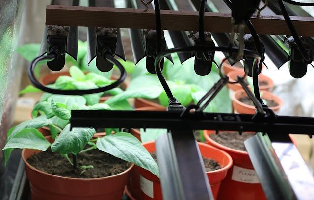 How To Choose Best Indoor Growing Light