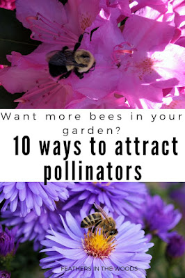 attract bees to your garden
