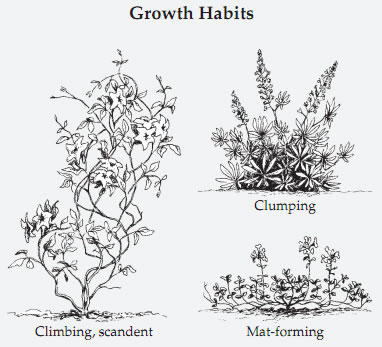Types of growth habits