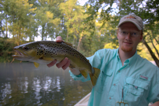 Caney Fork River brown trout