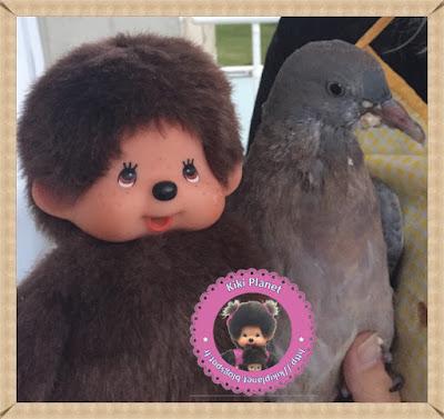 Kiki le Vrai et Colombine le bébé pigeon - oiseau - pigeon - oisillon - gavage - ramier