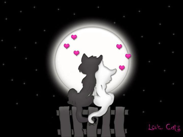 cinta pasangan kucing