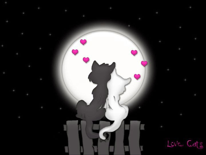 love cat couple