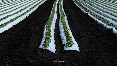 日本の風景 赤城山 畑 高原野菜