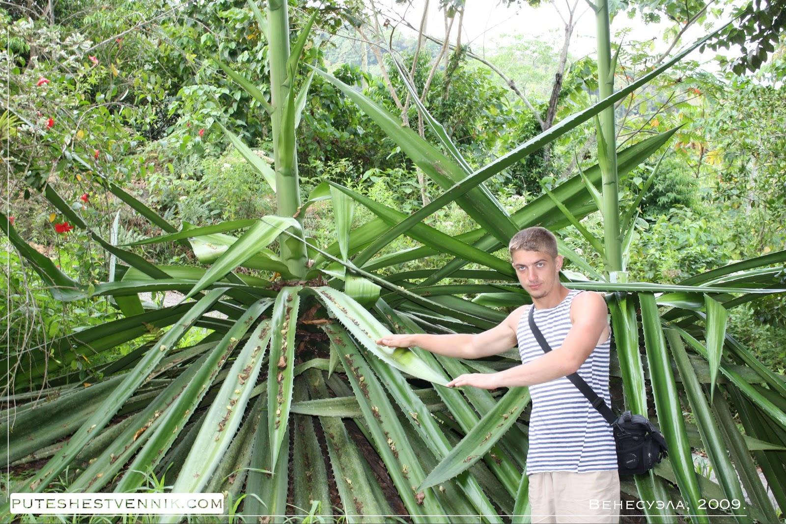 Путешественник в джунглях Венесуэлы