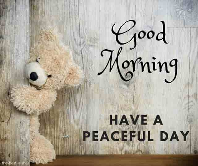 good morning with teddy have a peaceful day