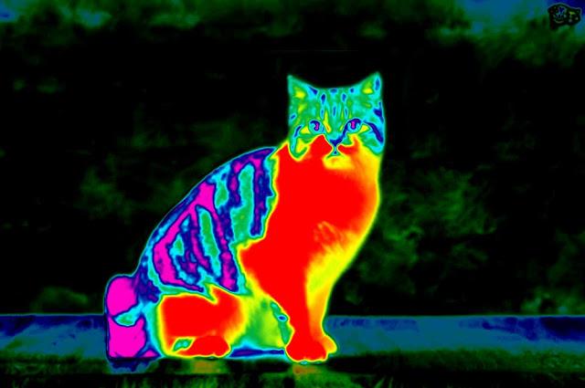 Inframerah Pada Kucing | ScienceABC.com