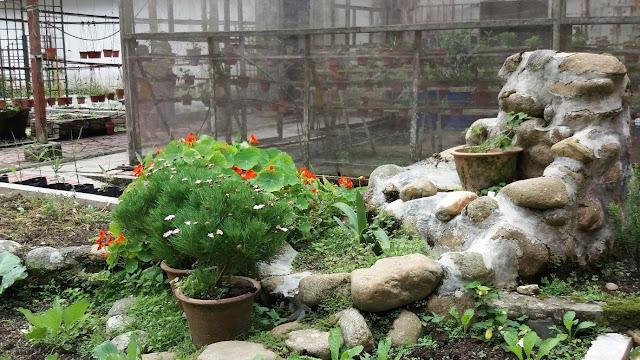 Taman Flora @ Bukit Fraser