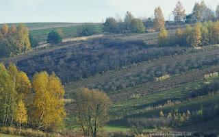 http://fotobabij.blogspot.com/2015/11/roztoczanskie-paski-pol.html