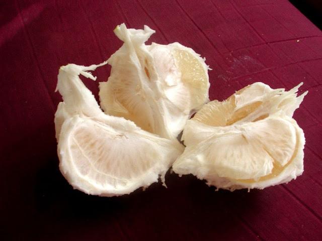 Múi Bưởi - Citrus maxima - Nguyên liệu làm thuốc Chữa Cảm Sốt