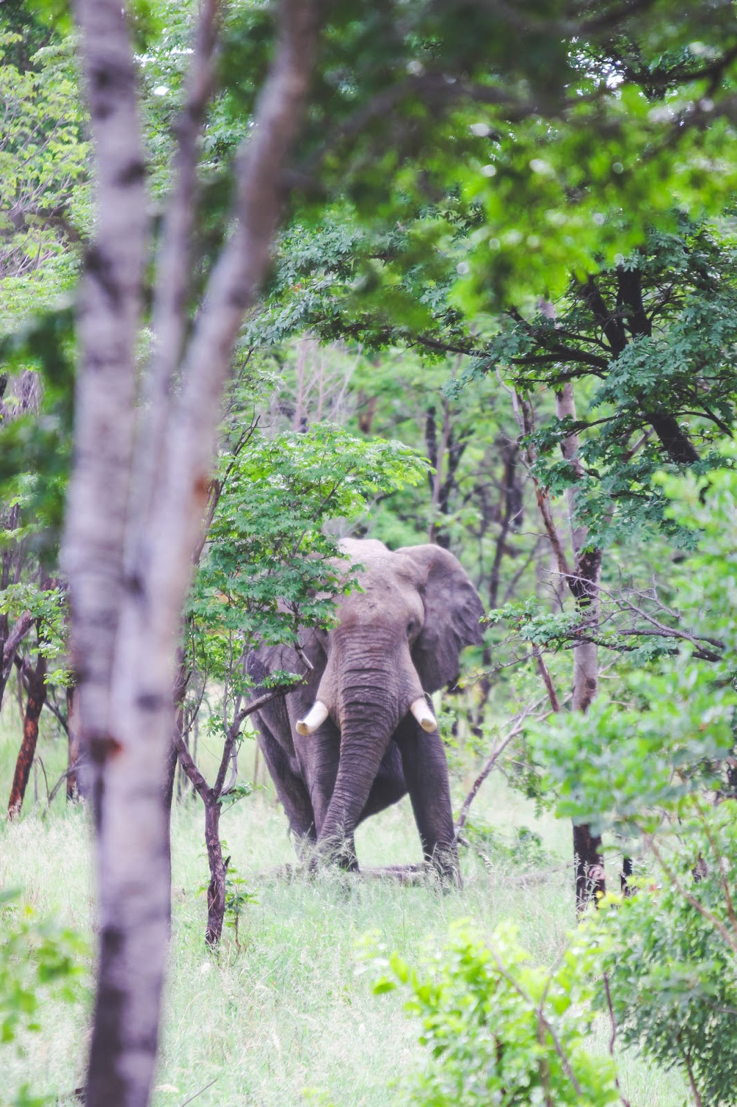 Our Experience on Imvelo's The Elephant Express // Hwange National Park