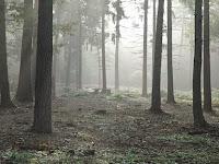 Apakah 'Leaf Man' Menghantui Hutan Sussex?