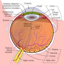 Stroke: Rewiring eye-mind association may reestablish vision