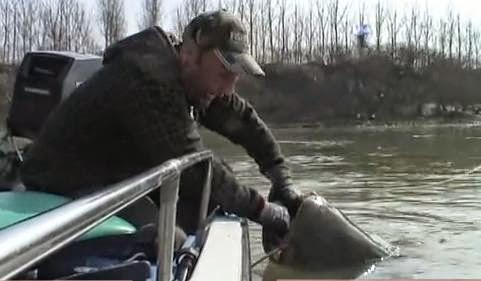 MAN FIGHT A RECORD MONSTER CATFISH OVER 100 KILOS IN THE RIVER PO IN ITALY !