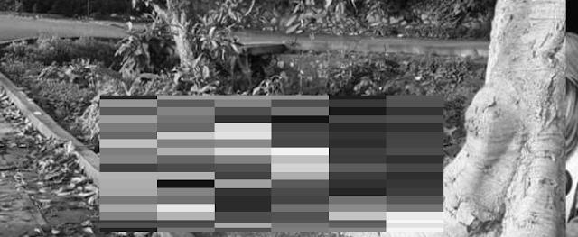 No tuvieron piedad de ellos fueron abandonados 5 cuerpos encobijados con impactos de bala en Tepic, Nayarit