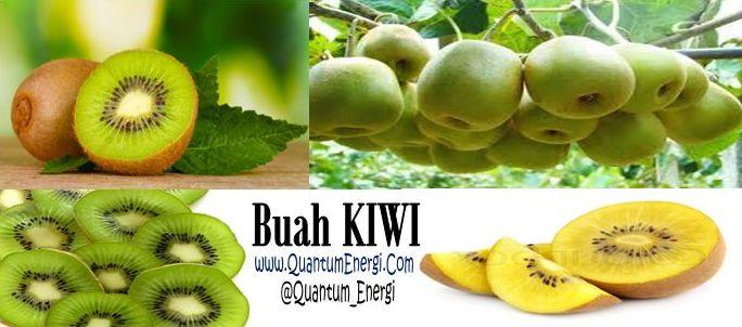 manfaat khasiat buah kiwi