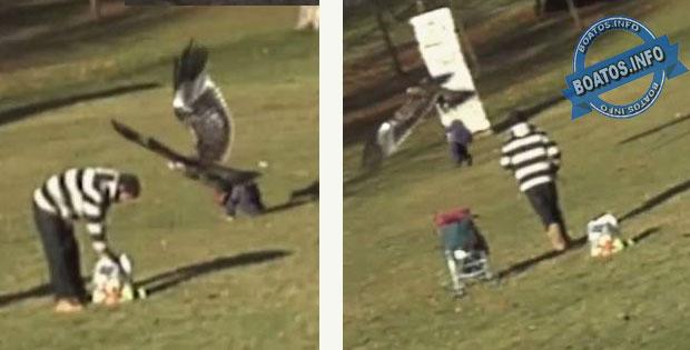 Águia tenta levar criança em parque no Canadá
