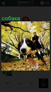 в парке девушка ведет на поводке собаку