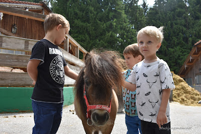 Pony streicheln