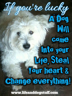 sentimental dog quotes | dog quotes inspirational