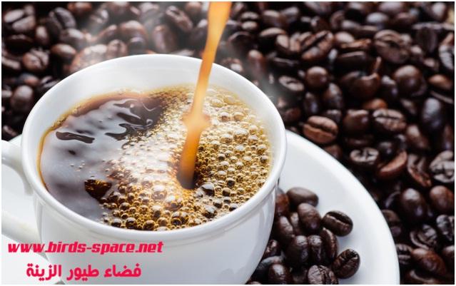 الكافيين مادة منشطة و مفيدة للإنسان لكن ليست كذلك بالنسبة لطيور الزينة فهي عكس ذلك تماما جد ضارة و حتى قاتلة إذا كانت الجرعة عالية .  الكافيين متواجد في القهوة ، الشاي و مشروب كوكـــا كولا .  يعتبر الكافيين من عائلة الزانثينات الميثيلية (methylated xanthines ) وهي مادة سريعة الامتصاص و تسبب أضرار كبيرة للجهاز العصبي المركزي و الكلية .  بحيث تسبب زيادة كبيرة حركة الطائر و معها زيادة كبيرة في  ضربات القلب و طرح كبير للبول بواسطة الكليتان و إصابة الطائر بالجفاف و يسبب أيضا ارتفاع في درجة الحرارة نتيجة النشاط المفرط كلها هذة الأعراض قد تؤدي بالطائر للموت .