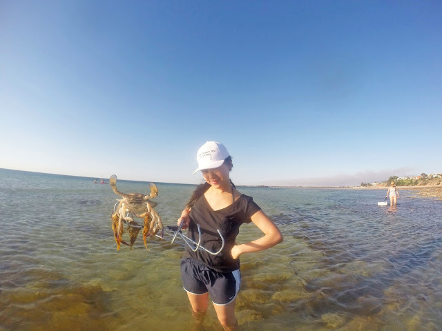 Crab raking in Yorke Peninsula, South Australia