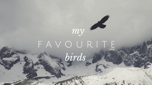 BOPAndOthers: MY FAVOURITE BIRDS!