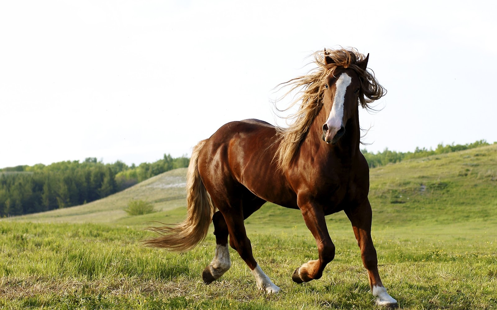 best 10 horse wallpapers hd for wonderful background ~ hd