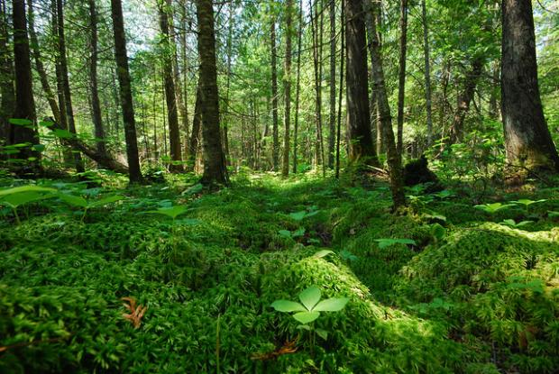 10 Contoh Sumber Daya Alam yang Dapat Diperbaharui