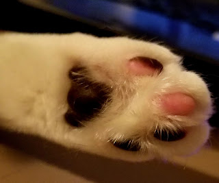 a photo of the bottom of a cat's paw