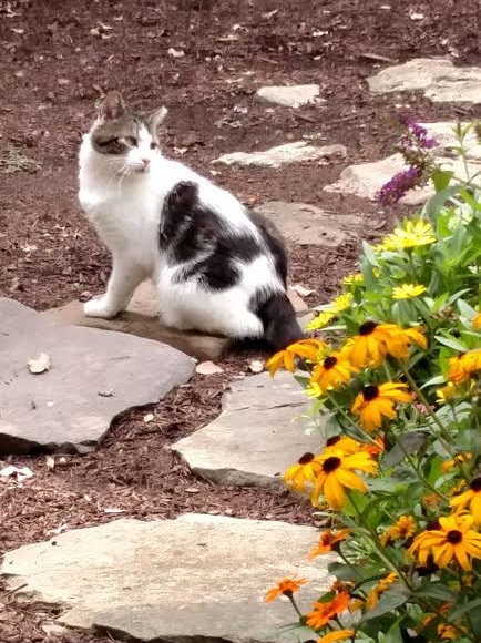 feral cat sitting in garden