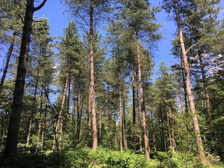 Hohe Bäume vermitteln das Gefühl von Wald