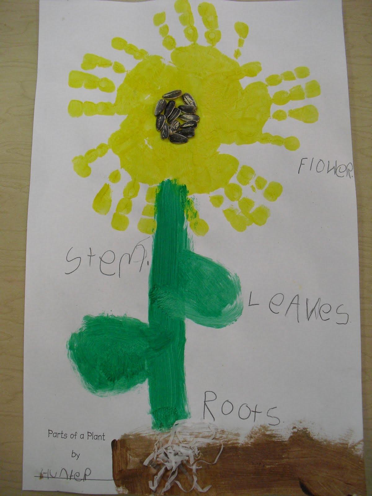 Mrs Cates Kindergarten Plants
