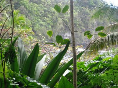 wet coast of Hawaii