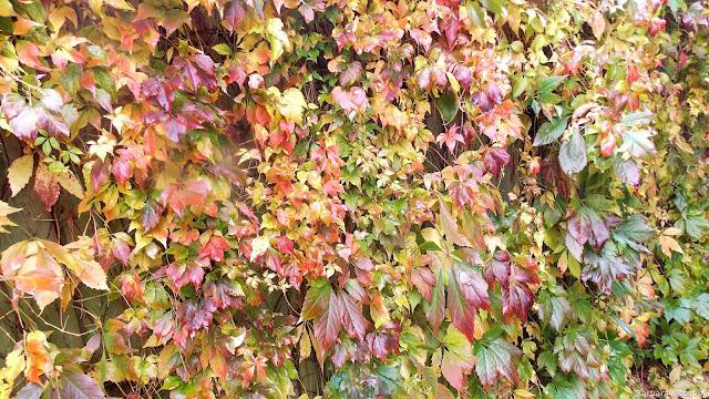 Herfst wallpaper met gekleurde bladeren op schutting.