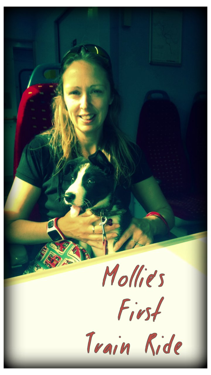 Mollies First Train Ride