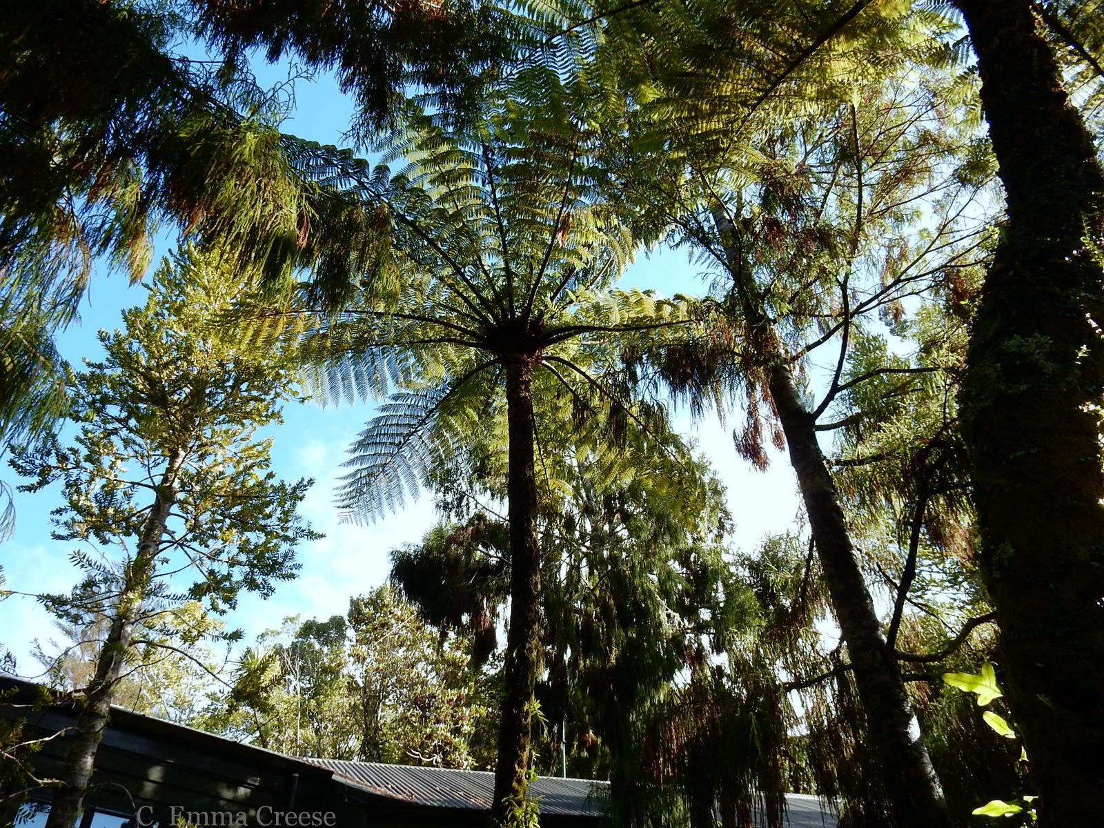 Tirirangi New Zealand Adventures of a London Kiwi