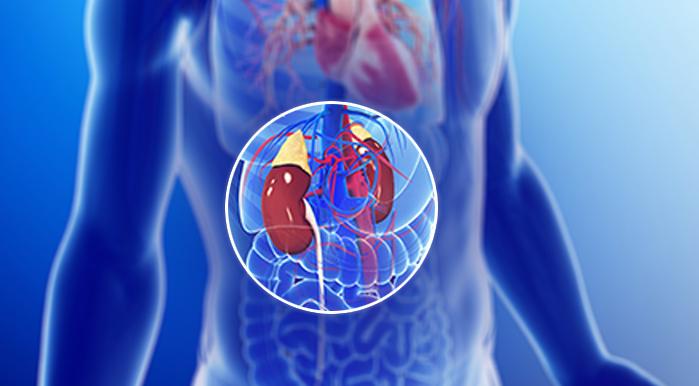 Kidney Failure or Renal failure