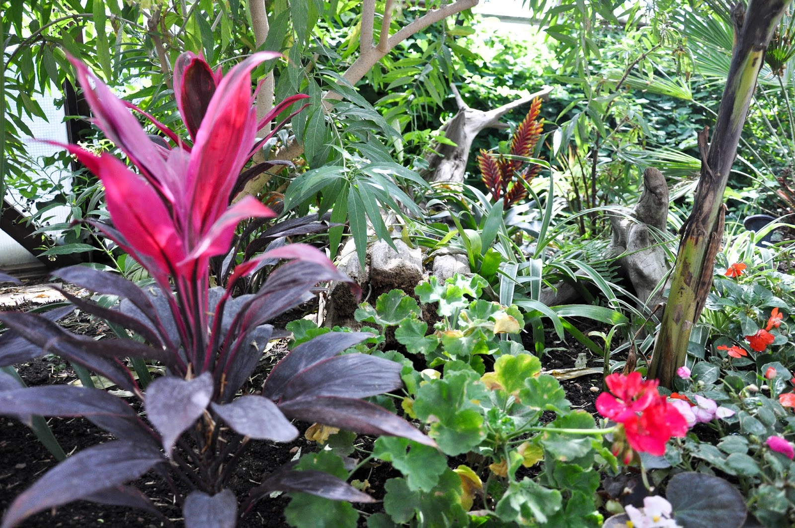 Inside the Tropical Butterfly House, The Butterfly World Project, St. Albans, Herts, UK