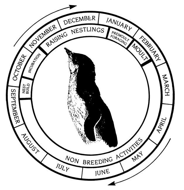Meerkat Diagram