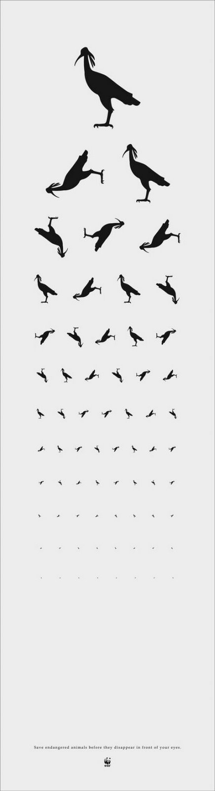 design context april 2011 DMV Vision Exam the zoo eye chart really works well for me i have noticed that they are all black silhouettes which stand out easy to municate the different animals