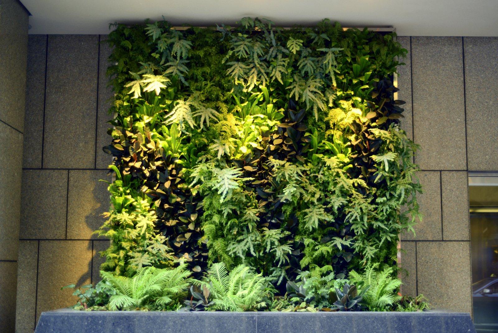 Plants On Walls Vertical Garden Systems: 6 Months Mature