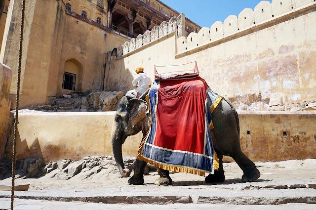 Gajah yang digunakan untuk mengangkut wisatawan di Amber Fort